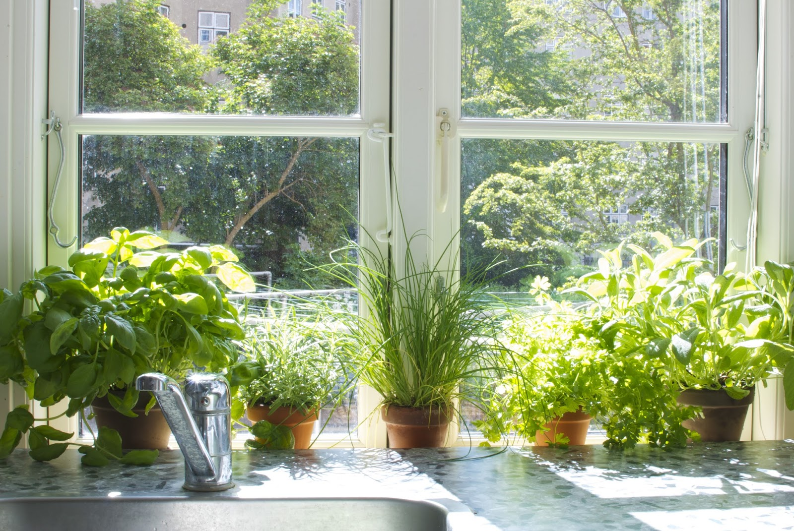 Indoor Herb Garden; grow one on your own with these tips - DIYVila